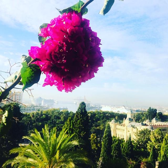 Málaga blomstrer som aldri før